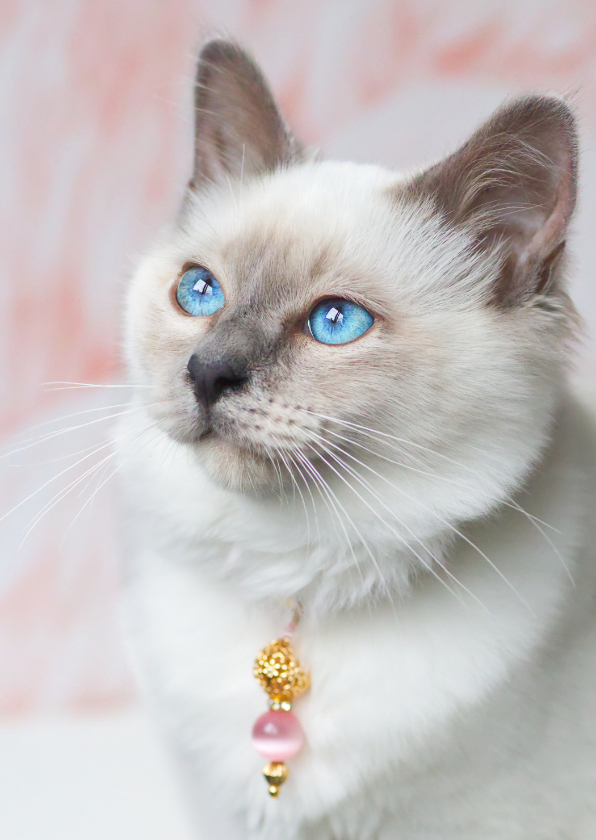 Liefde kaarten - Schattige liefdeskaart van kitten met roze achtergrond