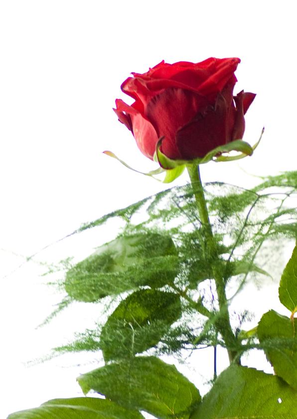 Moederdag kaarten - roos-moederdag