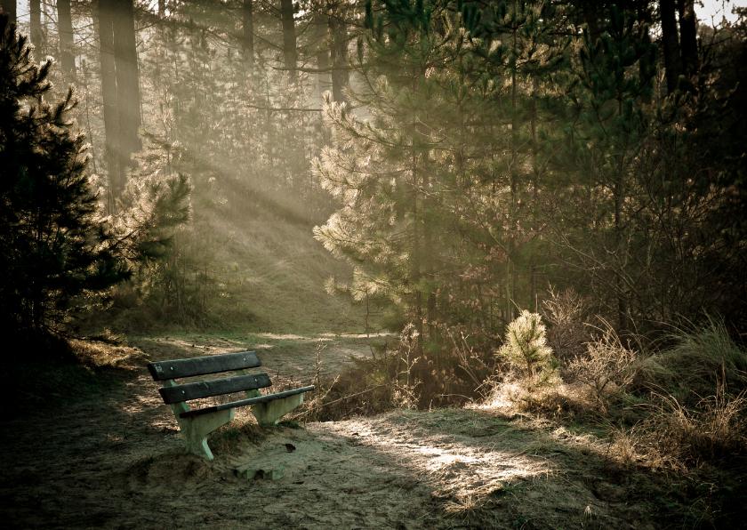 Rouwkaarten - Leeg bankje in bos met zonnestralen