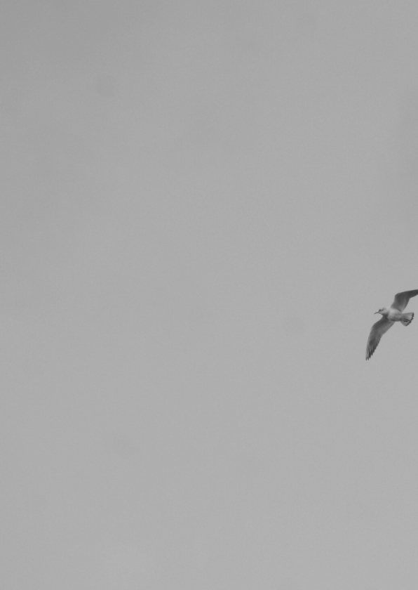 Rouwkaarten - Meeuw in lucht