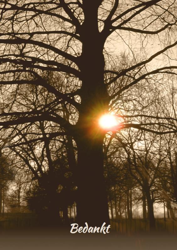 Rouwkaarten - Mooie rouwkaart met stoere oude boom en ondergaande zon