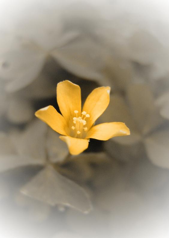 Rouwkaarten - Oranje bloem rouwkaart