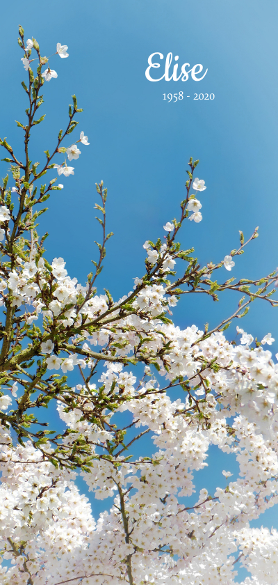 Rouwkaarten - Rouwkaart lente bloesem