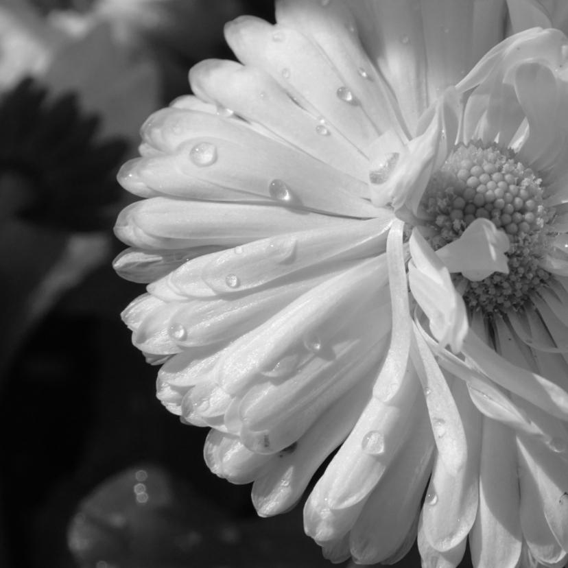 Rouwkaarten - Rouwkaart witte bloem dauwdruppels - SK