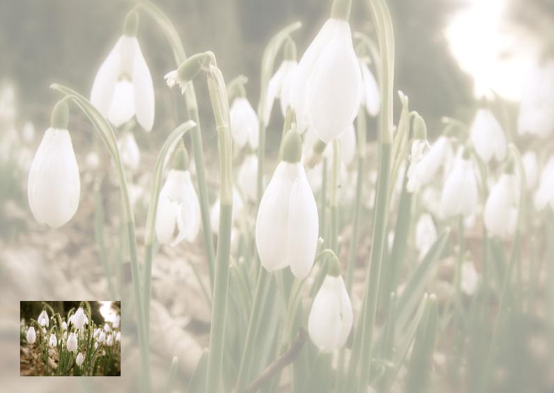 Rouwkaarten - Sneeuwklok 1 rouw-bedankkaart