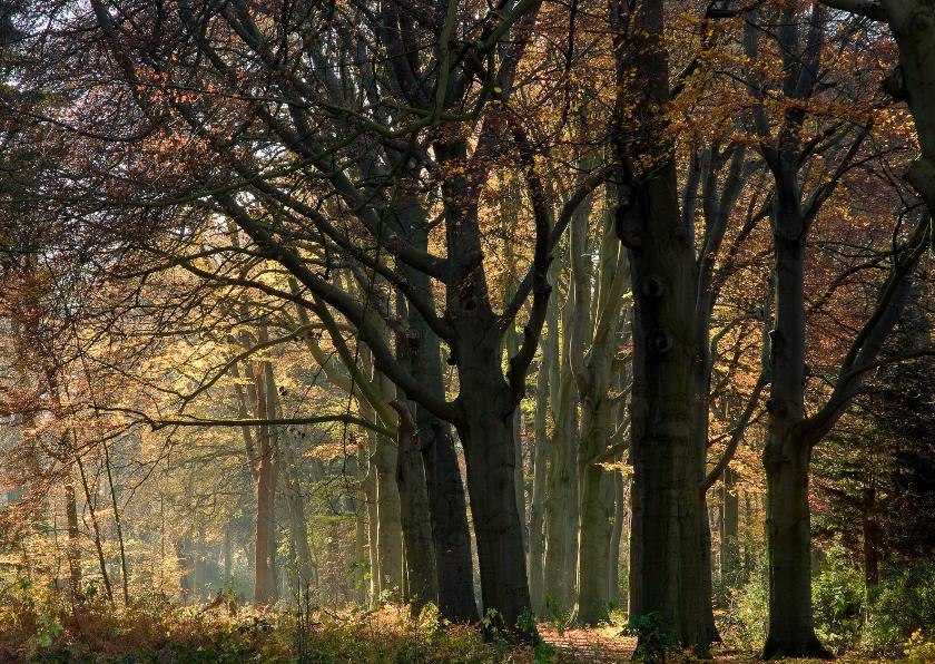Rouwkaarten - Verstild herfstbos in vriendelijk licht