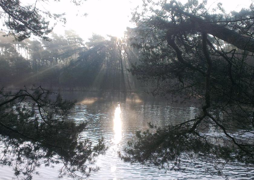 Rouwkaarten - Winterlicht