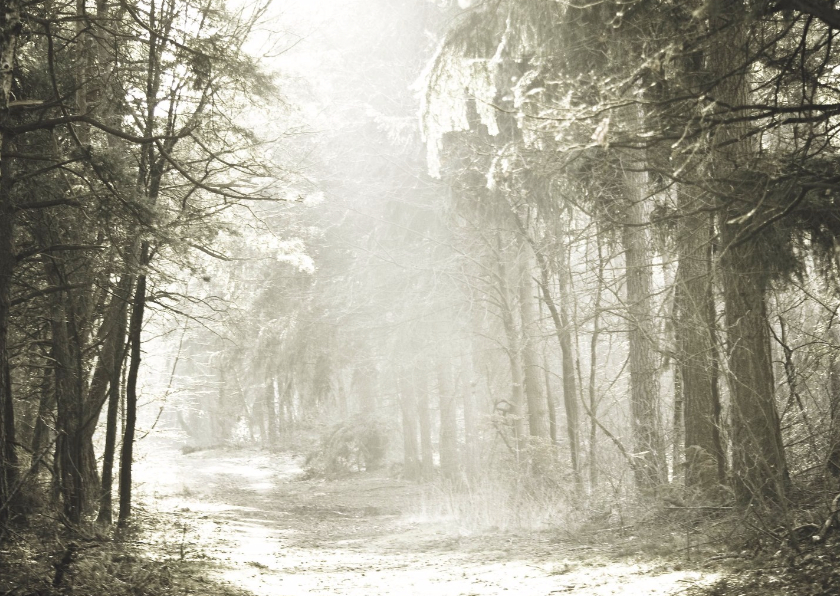 Rouwkaarten - Winterstilte