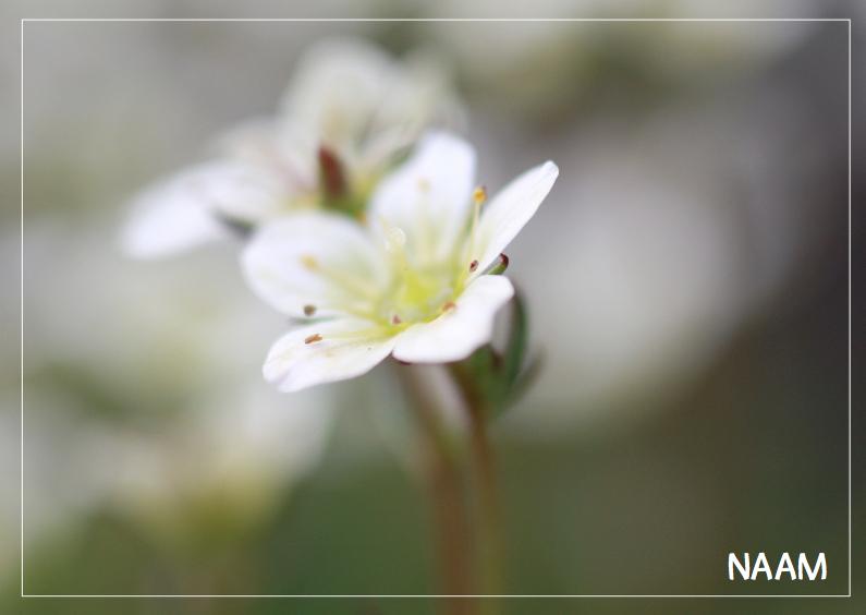 Rouwkaarten - Witte bloem rouwkaart