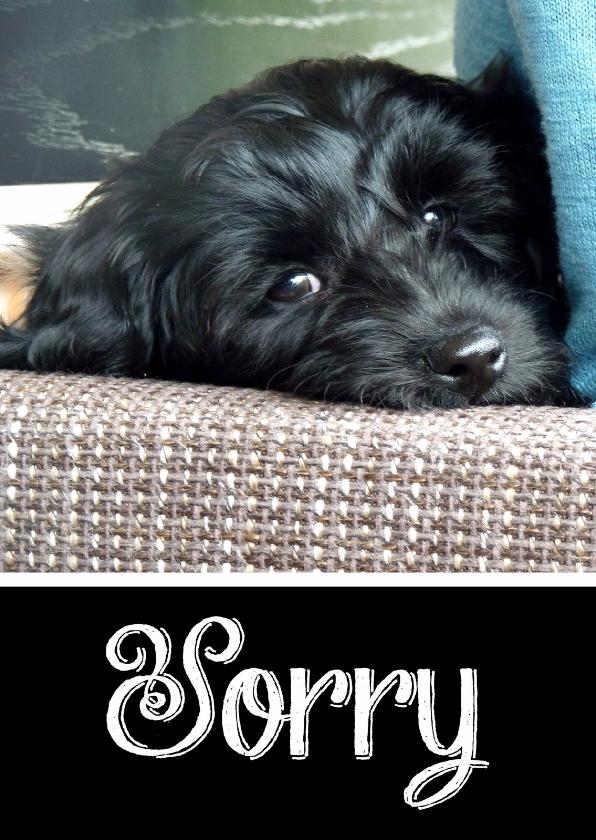 Sorry kaarten - Sorry kaart hond