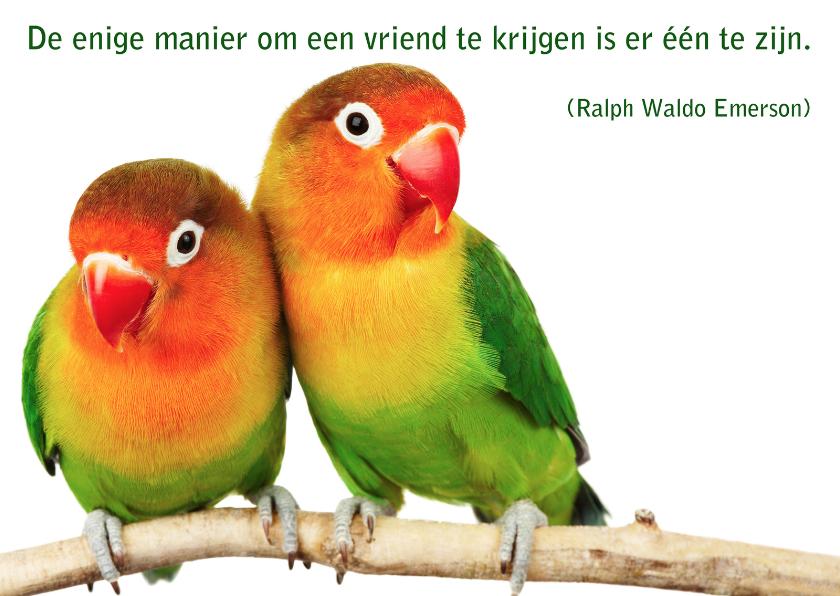 spreuken met vogels Kaart met spreuk vogel   Spreukenkaarten | Kaartje2go spreuken met vogels