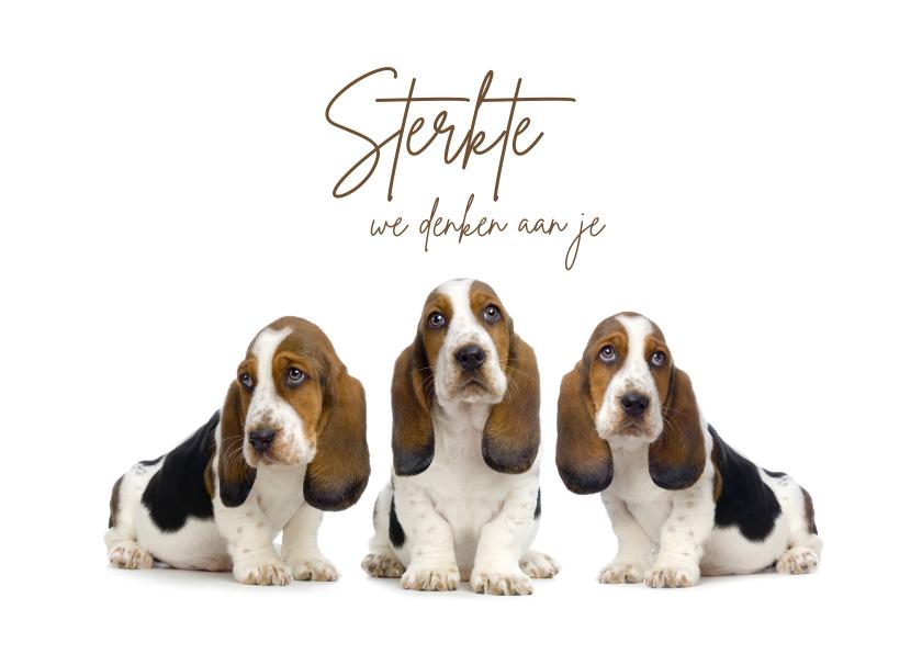 Sterkte kaarten - Drie lieve hondjes die sterkte wensen