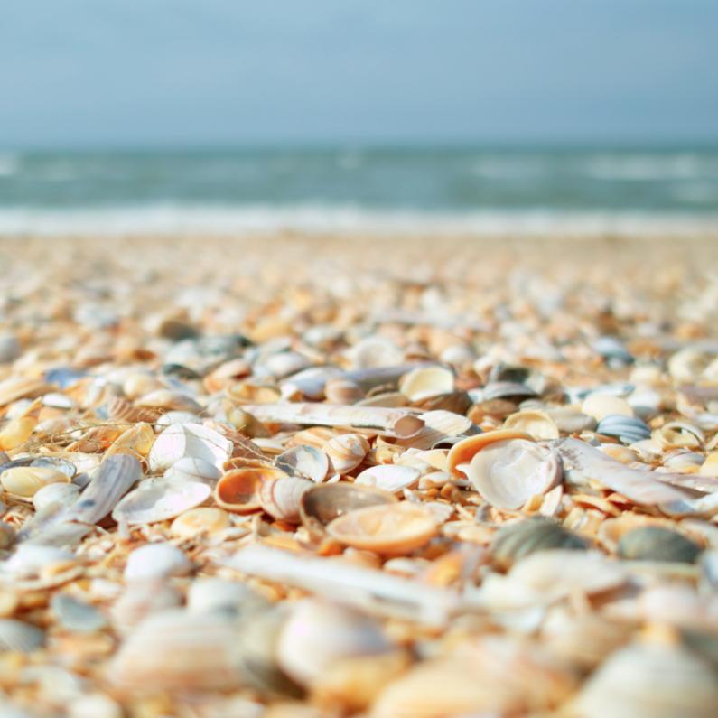 Sterkte kaarten - duo kaart strand schelpen en zeewier