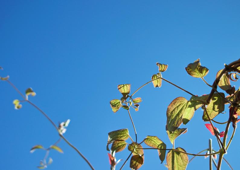 Sterkte kaarten - herfstblaadjes