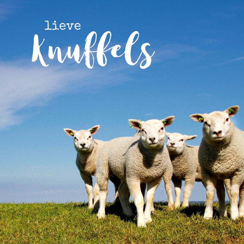 Sterkte kaarten - Lieve Knuffels Lammetjes - Lente