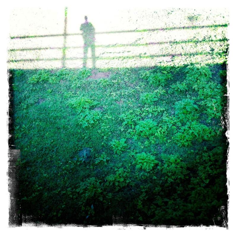 Sterkte kaarten - schaduw op het gras