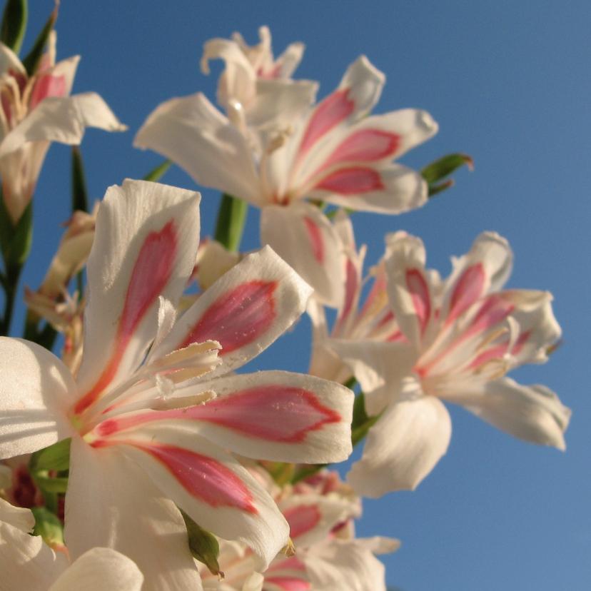 Sterkte kaarten - Sterkte kaart bloemen -LB