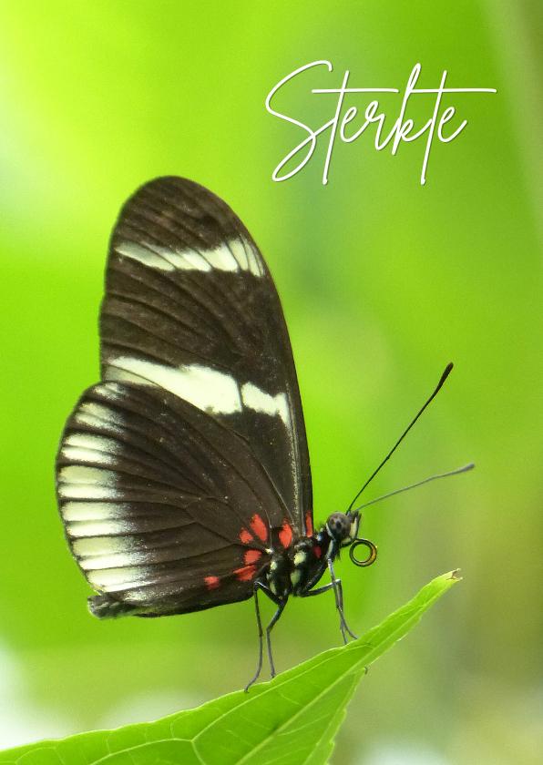 Sterkte kaarten - Sterkte Vlinder in het groen