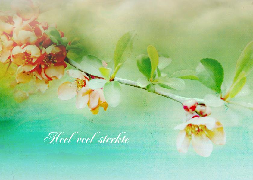 Sterkte kaarten - Sterktekaart bloesem lente kleuren