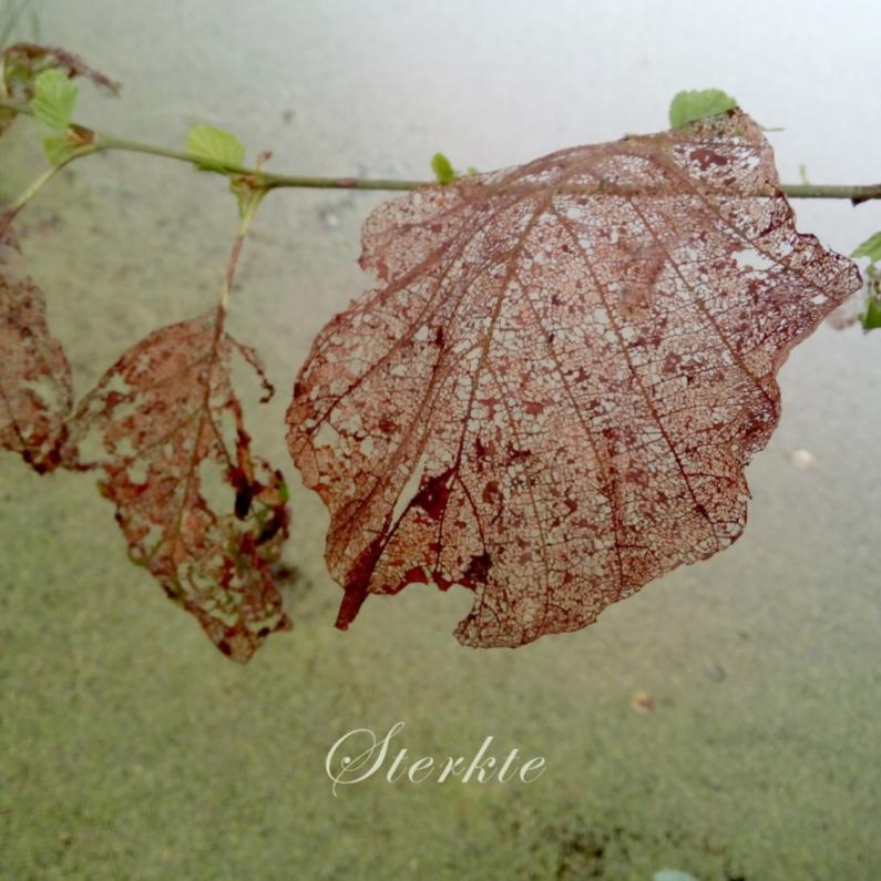 Sterkte kaarten - Sterktekaart met bladeren