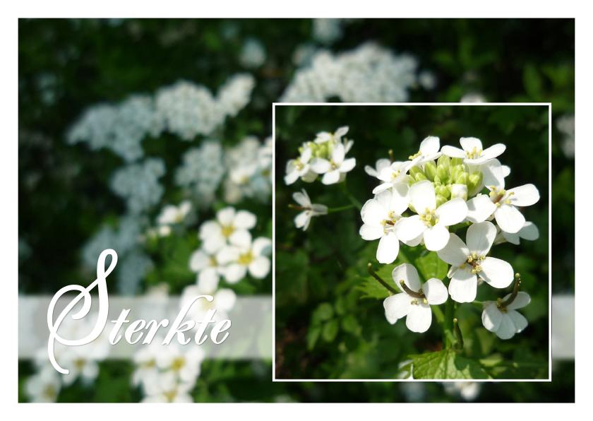 Sterkte kaarten - witte bloemetjespracht