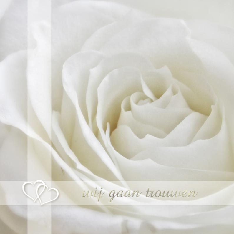 Trouwkaarten - witte roos vierkant
