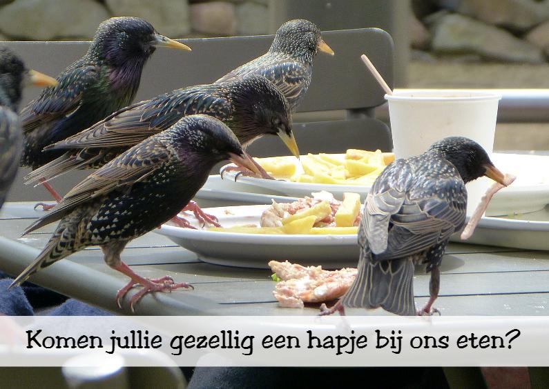 Uitnodigingen - Vogels eten hapje mee