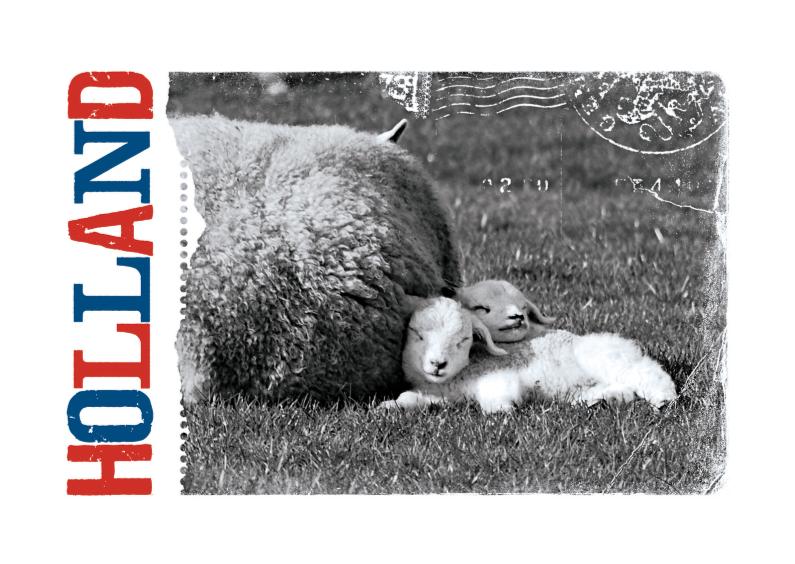 Vakantiekaarten - 14185 Lammetjes Holland