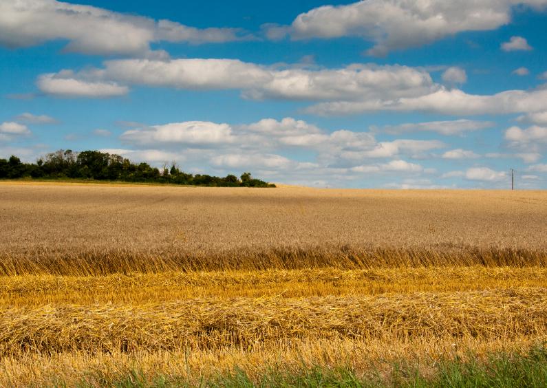 Vakantiekaarten - Frans platteland