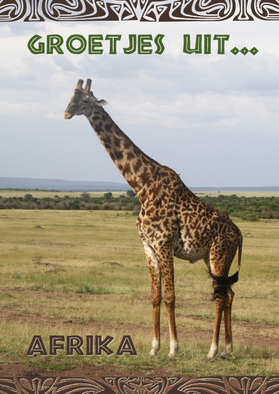 Vakantiekaarten - Giraffe 0