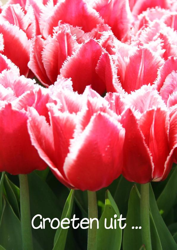 Vakantiekaarten - Groeten uit met tulpen