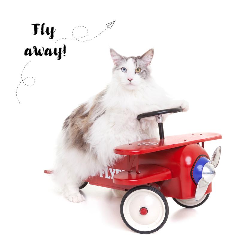 Vakantiekaarten - Vakantiekaart - Fly away kat
