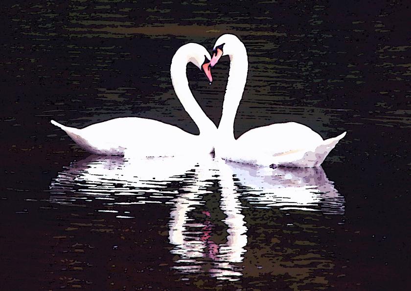 Valentijnskaarten - Zwanen Blanco