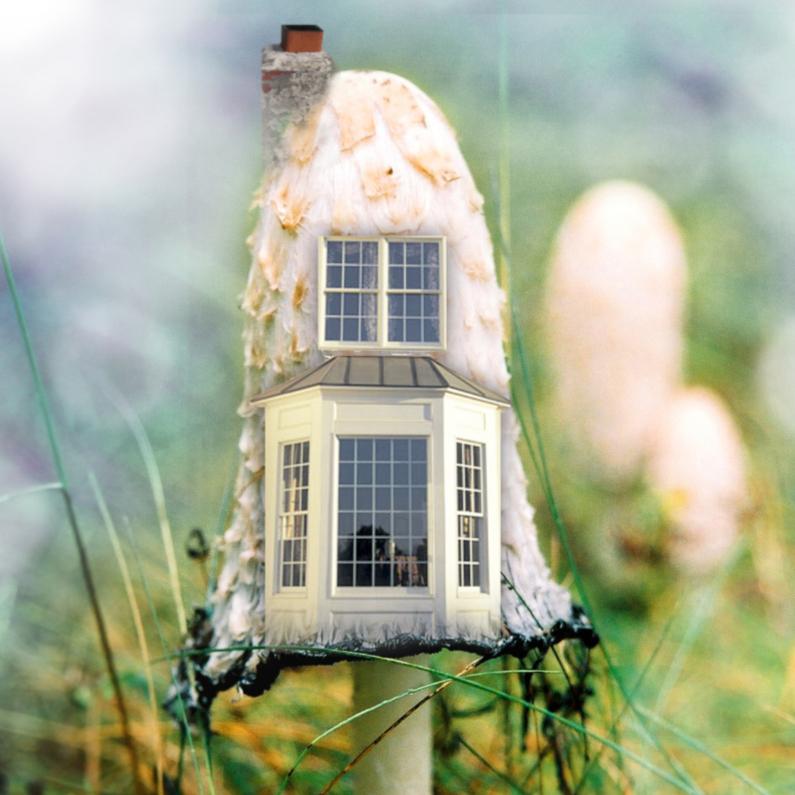 Verhuiskaarten - Een nieuw huisje padddestoel 3
