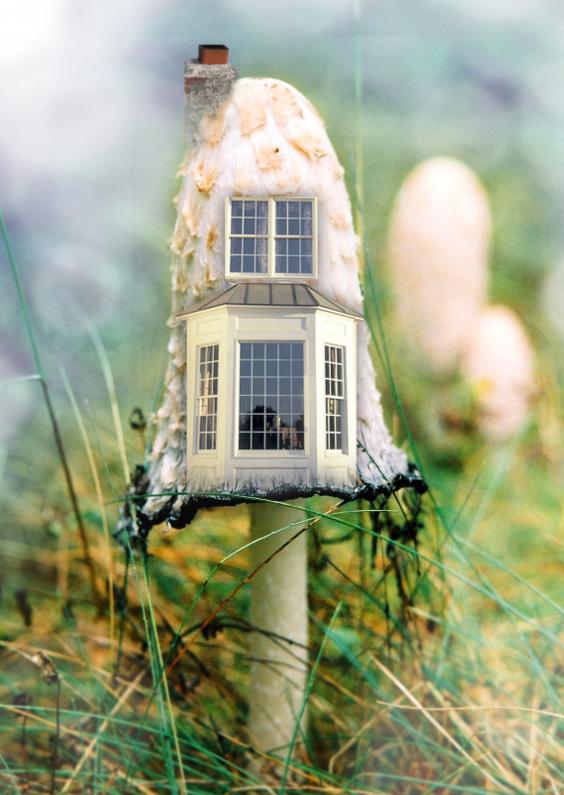 Verhuiskaarten - Een nieuw huisje paddestoel 2