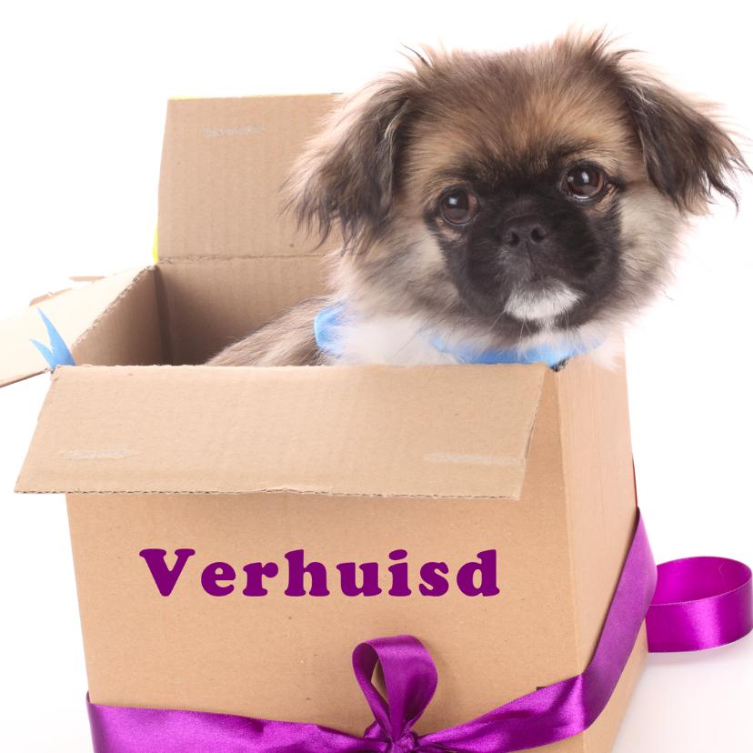 Verhuiskaarten - Verhuisd hondje in doos