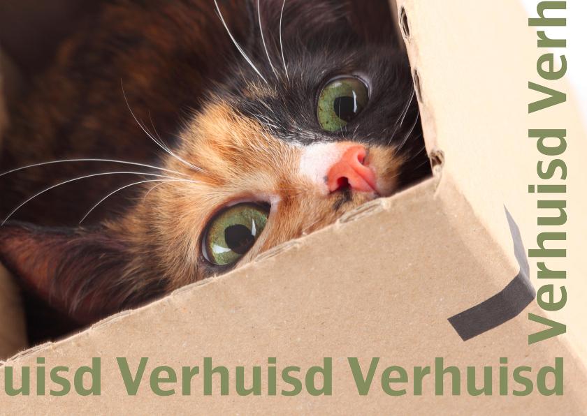 Verhuiskaarten - Verhuisd kat in doos