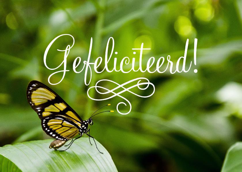 Dieren Vlinder Gefeliciteerd 1
