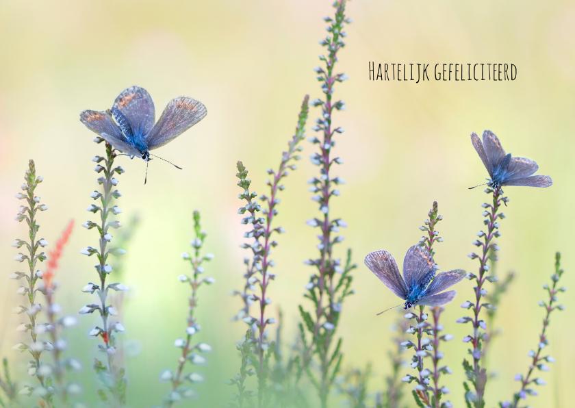 Verjaardagskaarten - Felicitatie vlinders op de hei