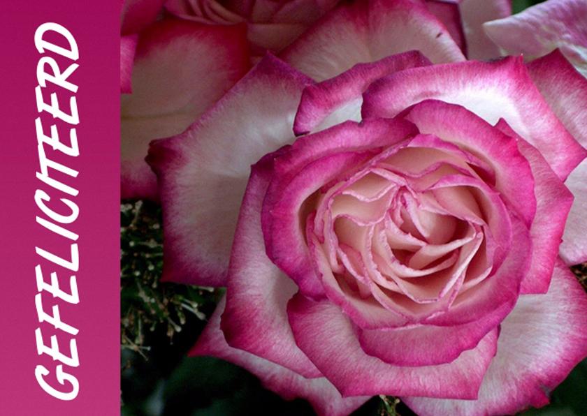 Verjaardagskaarten - Gefeliciteerd roos klassiek