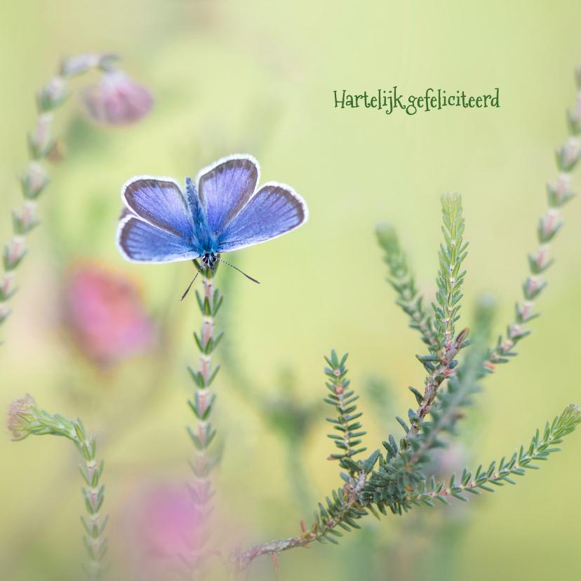 Verjaardagskaarten - Heideblauwtje op de dopheide
