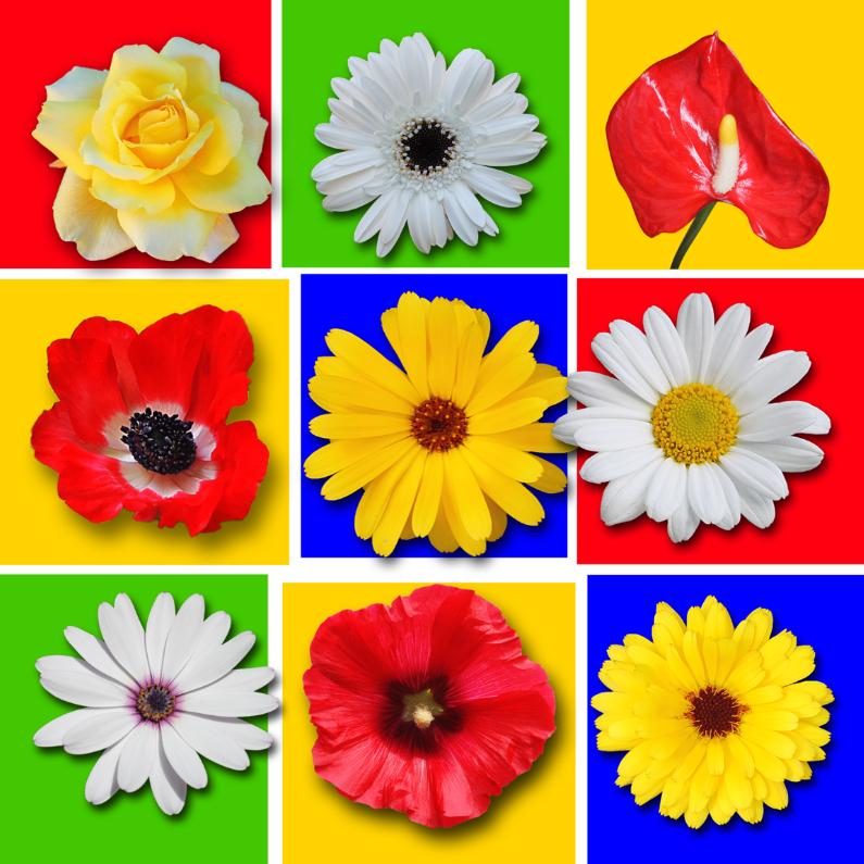 Verjaardagskaarten - Jarig, bloemen in kleurvlakken
