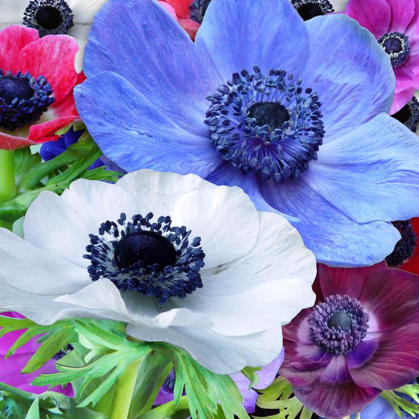 Verjaardagskaarten - Mooie verjaardagskaart met Anemonen in diverse kleuren