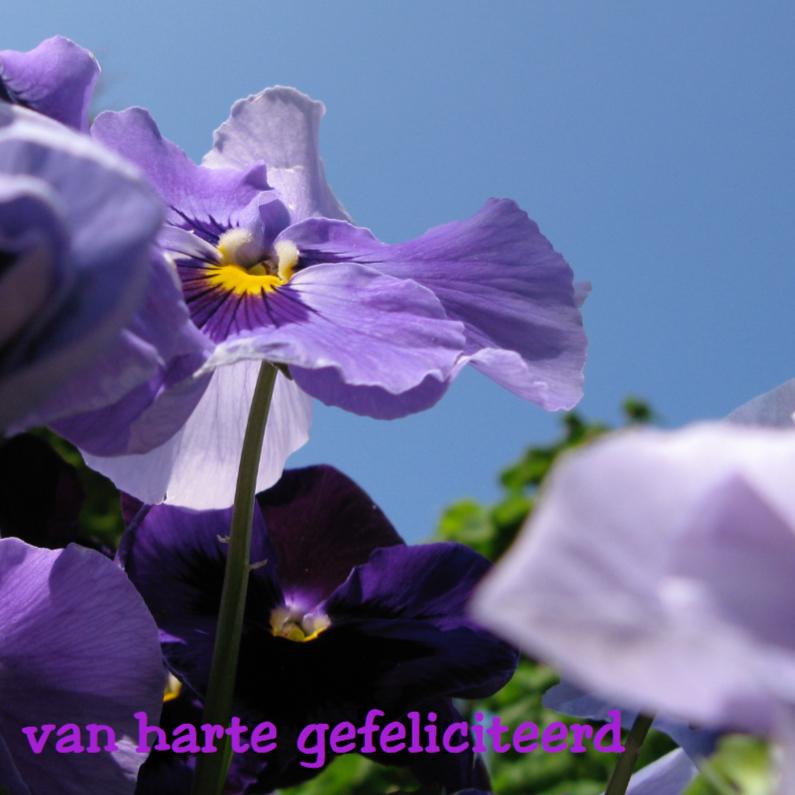Verjaardagskaarten - paarse bloemenkaart