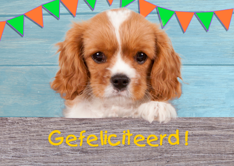 Verjaardagskaarten - puppy feliciteert je
