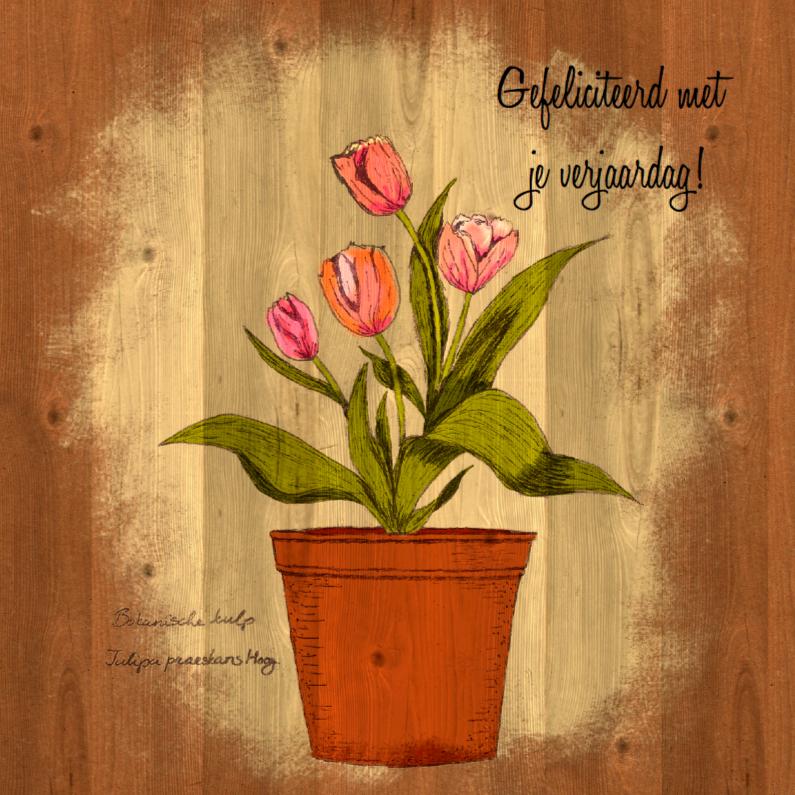 Verjaardagskaarten - Verjaardag botanische tulpen