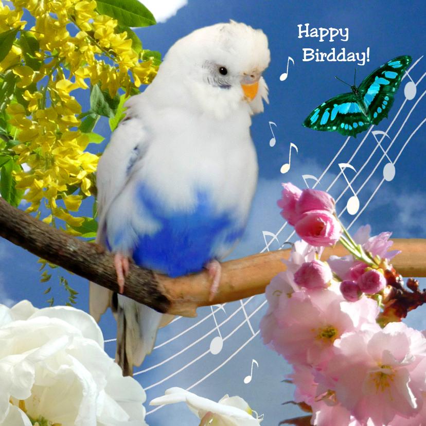 Verjaardagskaarten - Verjaardag Happy Bird day