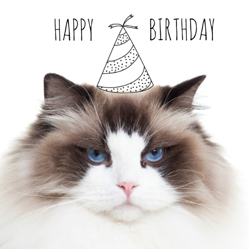 Verjaardagskaarten - Verjaardag | Not so happy birthday cat | Kat