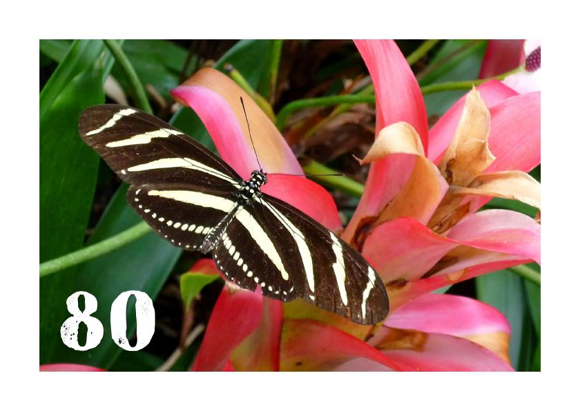 Verjaardagskaarten - Verjaardag streepvlinder