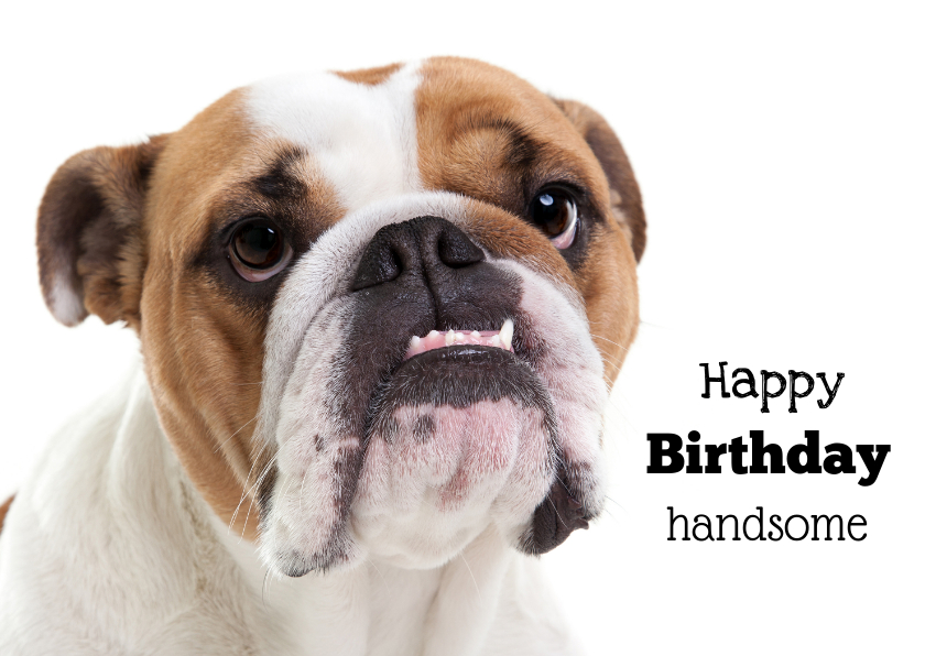 Verjaardagskaarten - Verjaardagskaart - Happy Birthday Handsome - Bulldog